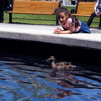 Young girl looking at duck