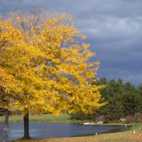 Fall day at Andrew Haydon Park