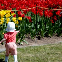 Kid in front of tulip bed at Ottawa`s annual Tulip Festival