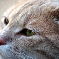Cat close-up