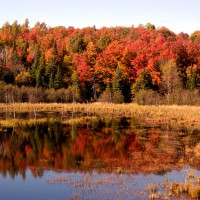 Fall scene in Gatineau Park