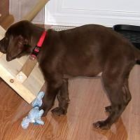 November 14, 2007 - Bo-D