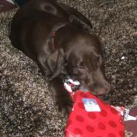 December 23, 2007 - Bo-D