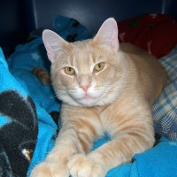 January 12, 2009 - Kreamer