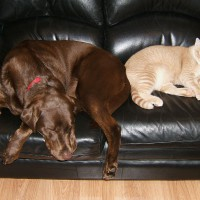 March 15, 2009 - Winzor, Kreamer