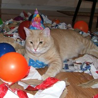 March 29, 2009 - Kreamer