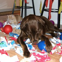 March 29, 2009 - Kreamer, Winzor