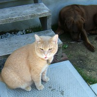 June 5, 2009 - Kreamer, Winzor
