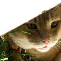 June 22, 2009 - Kreamer