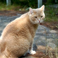 July 20, 2009 - Kreamer