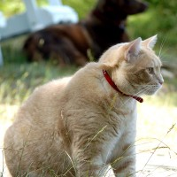 July 20, 2009 - Kreamer, Winzor