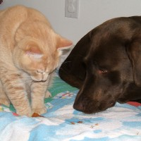 October 12, 2009 - Kreamer, Winzor