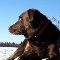 December 8, 2009 - Winzor