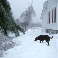 December 27, 2009 - Winzor