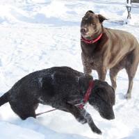 January 9, 2011 - Bochi, Winzor