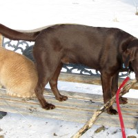 February 27, 2011 - Kreamer, Bochi