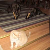 August 7, 2011 - Kreamer, Winzor, Bochi