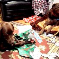 December 25, 2011 - Bochi, Winzor