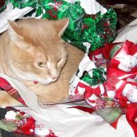 December 25, 2011 - Kreamer