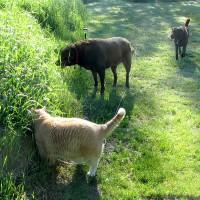 June 15, 2013 - Kreamer, Winzor, Bochi